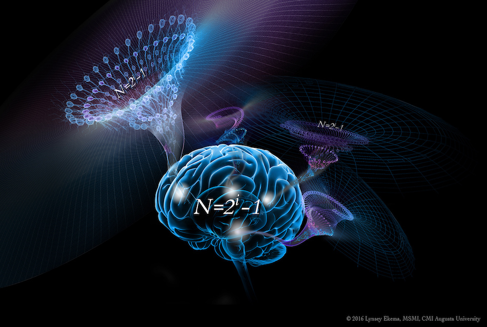 3ee91583da5 Our brains have a basic algorithm that enables our intelligence ...