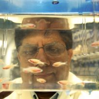 Dr. Surendra Rajpurohit looking through a fish tank in his laboratory.
