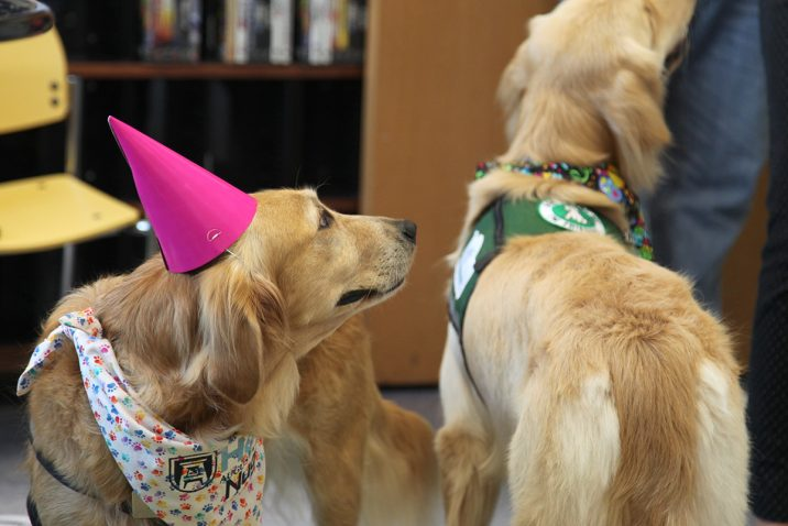 two dogs, one with a party hat