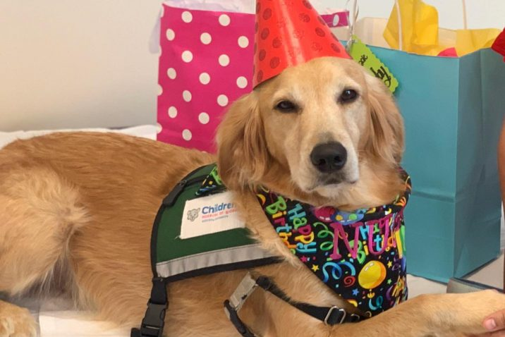 dog poses with birthday hat