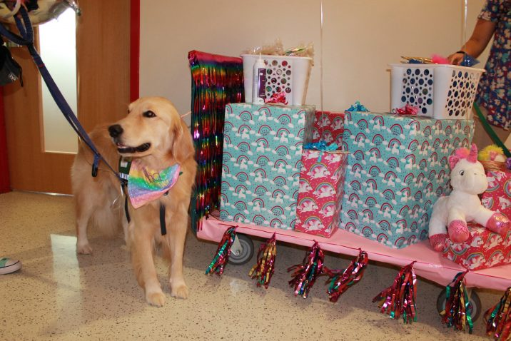 dog next to cart of gifts