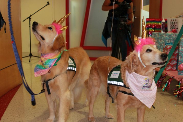 two dogs with birthday hats