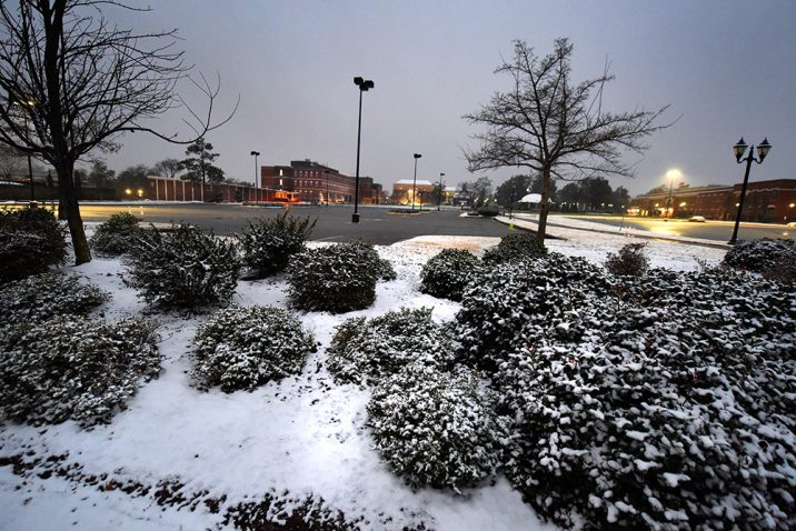 light snow on bushes