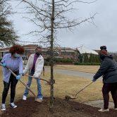 3 women with shovels scoop dirt