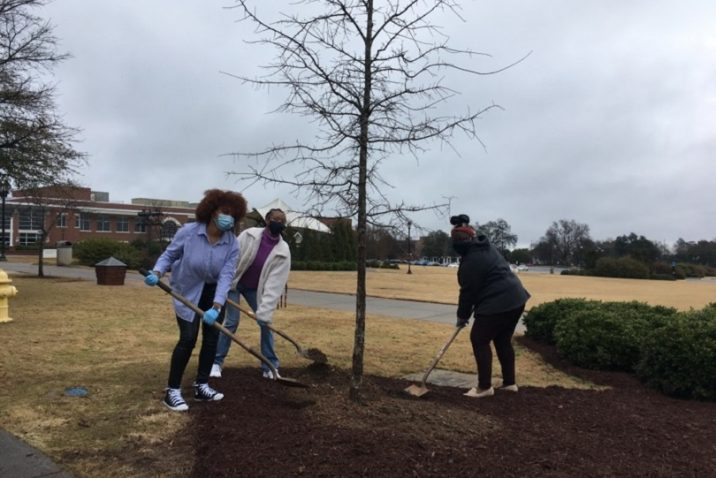 3 women with shovels scoop dirt around a tree