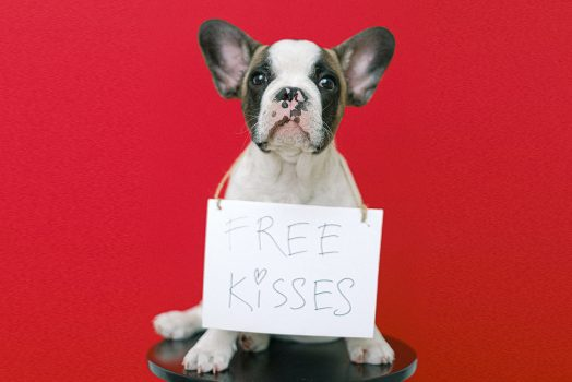 Puppy with free kisses sign