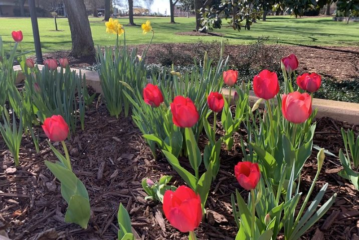 red bulbs in raised flower bed