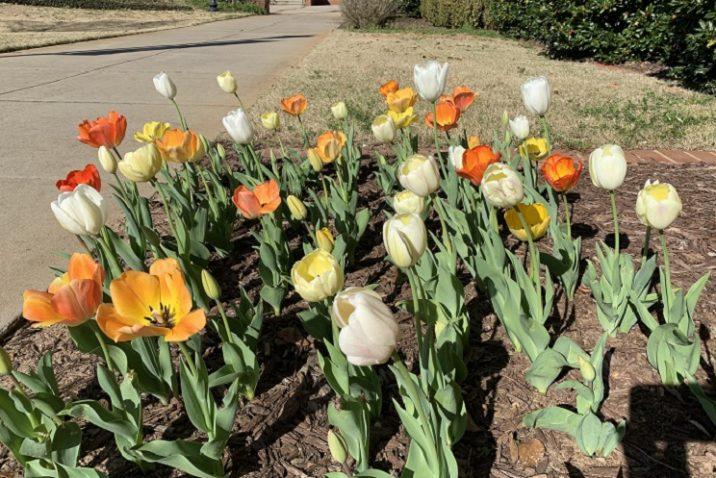 orange, yellow and white bulbs