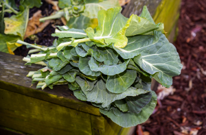 a green leafy vegetable