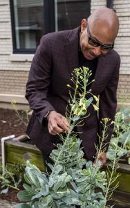a man stands over a vegetable garden